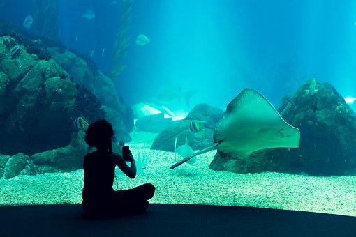 Oceanarium, Aquarium, Lisbon, Portugal, Tourism, Trip
