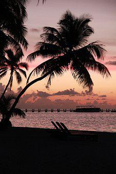 Sunrise, Morgenrot, Florida Keys, Palm In The Dawn