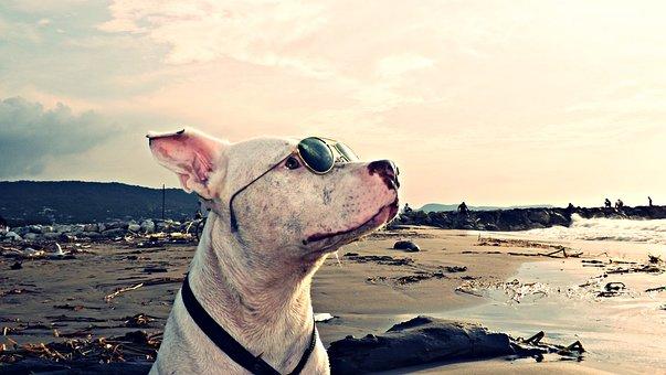 Dog, Pet, Puppy, Profile Dog, Animals, Animal, Beach
