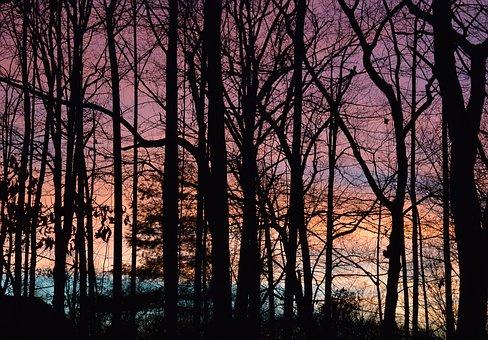 Sunset Through The Trees, Sunset, Winter, February