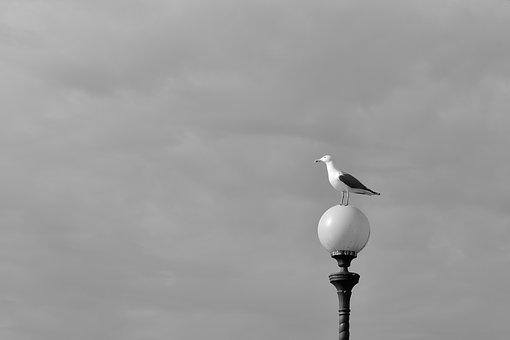 Leghorn, Landscape, Views, Seagull, Seagulls, Vista