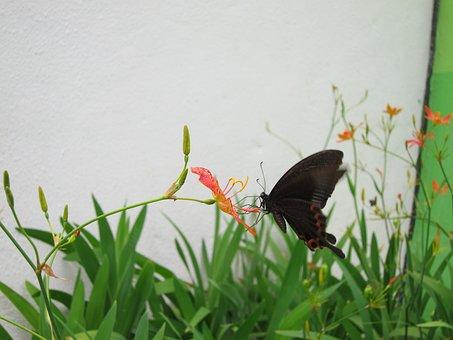 Butterfly, Adopt Honey, Flower