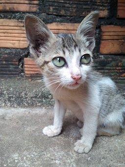 Cat House Physician, Cat, Tabby Cat