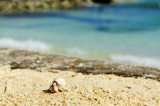 Cancer, Shell, Beach, Crab, Sea Animals, Hermit Crab