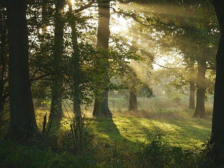 Morning Sun, Forest, Glade, Sunbeam, Dew, Humidity