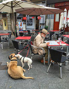 Madrid, Dogs, Morning In The City, Newspaper, Pensioner
