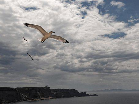 Flying Seagull, Mouth Of Bonifacio, Corsican, France