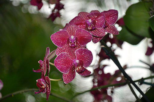 Orchids, Flowers, Ny Botanical Gardens, Nature