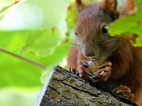 Animal, Squirrel, Tree, Observation, Garden, Sitting