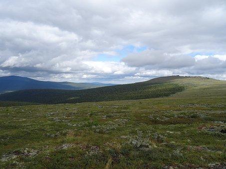 Dyatlov Pass, Kurumnik, Road, Nature, Camping, Plant