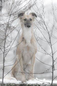 Silken Wind Sprite, Dog, Dog In The Snow