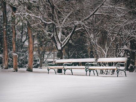 Vienna, Park, Park Bench, Benches, Trees, Snow, Winter