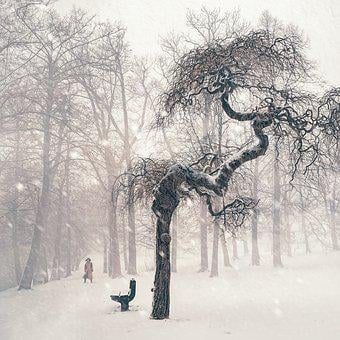 Tree, Winter, Snow, Person, Wintry, Snowy, Landscape