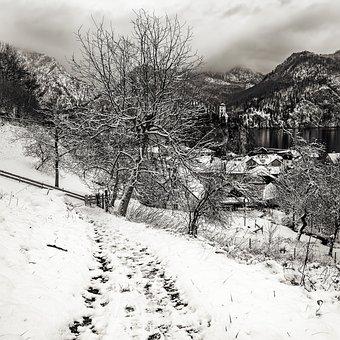 Traunkirchen, Winter, Snow, Wintry, Snowy, Tree