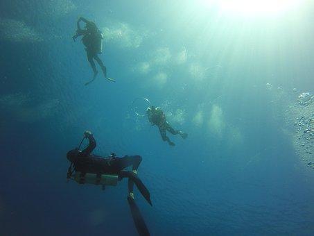 Scuba Diving, Diving, Ocean, Scuba, Water, Underwater