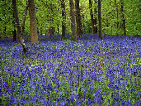 Bluebell, Wood, In Autumn