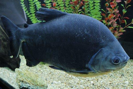 Fish, Fishbowl, Water, Aquarium, Aquatic, Underwater
