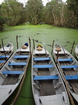 Asia, Mangroves, Mekong Delta, Vietnam, Nature, Holiday
