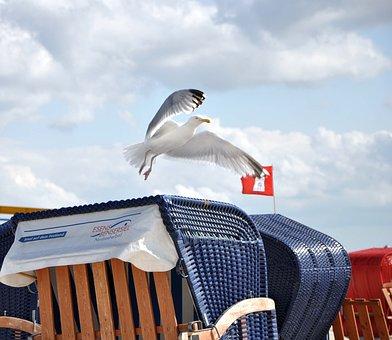 Seagull, Beach Chair, North Sea, Holiday, Bensersiel