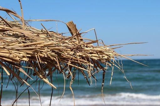 Beach, Summer, Primorsko, Bulgaria, Summer Beach, Sea