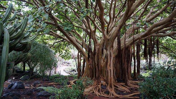 Canary Islands, Botanical Garden, Subtropical, Plants