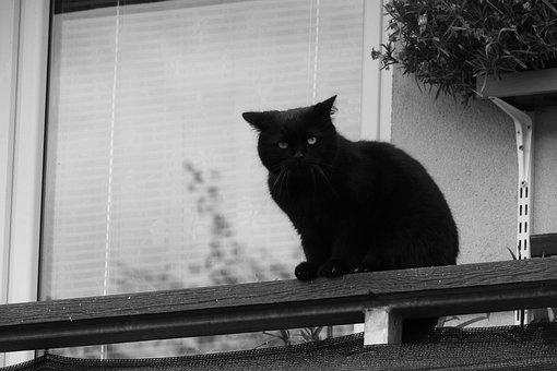 Black Cat, Cat On A Balcony, Cat In
