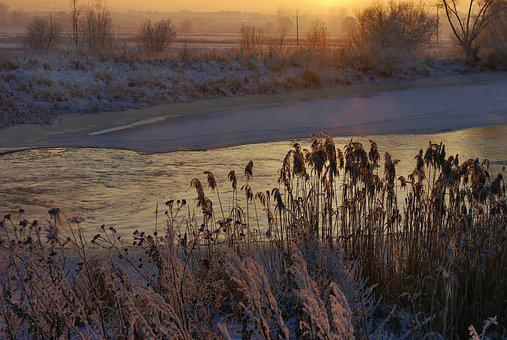 River, Cane, Winter, Winter Holidays, Water, Frost
