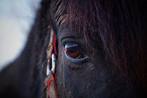 Horse, Eye, Horse Head, Pferdeportrait, Horse Eye