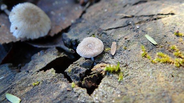 Mushroom, Wabi-sabi, Nature, Rustic, Adversity, Stone
