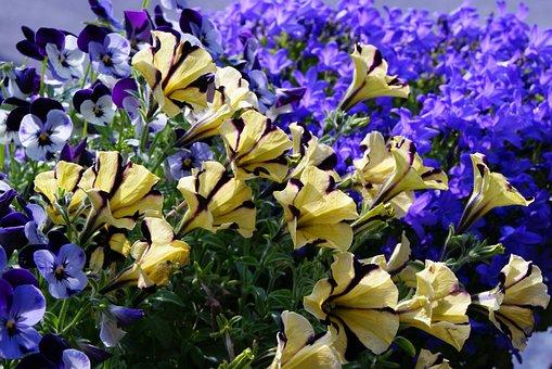 Surfinia, Petunia, Bellflower, 400–500, Flower, Flowers