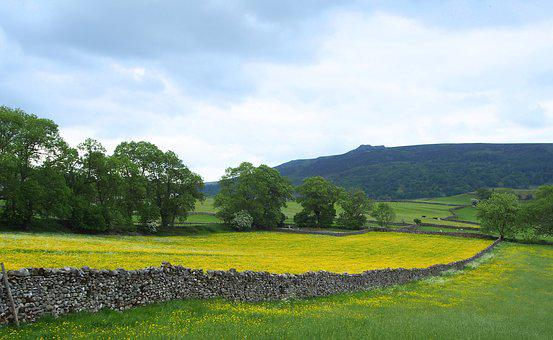 Simon's Seat, Walled Fields, Yorkshire