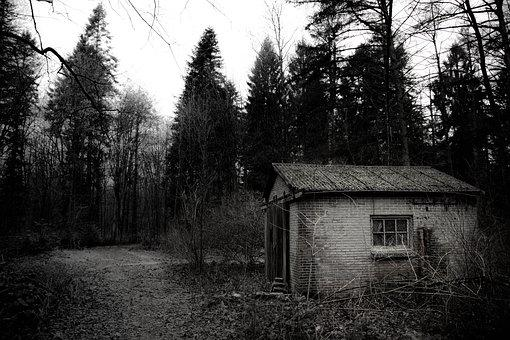 Blackandwhite, Shed, Forest, Black, Nature, Outdoors