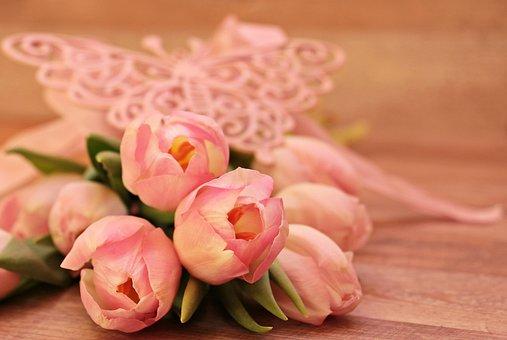 Tulips, Tulipa, Butterfly, Butterfly Pink, Flowers