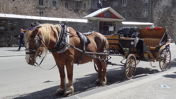 Horse, Cart, Carriage, Montreal