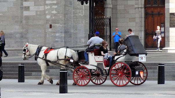 Carriage, Horse, Cart, Transport Montreal