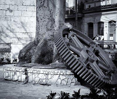 Gear, Tree, City, Structure, Cuba, Downtown, Space