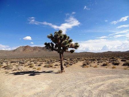 Joshua Tree, Desert, Landscape