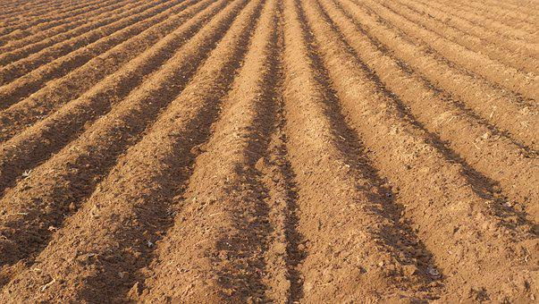 Field, Farmland Rut, Agriculture, Symmetry, Pattern