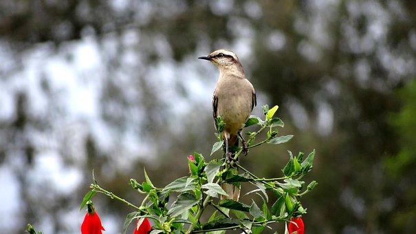 Bird, Haughtiness, Sovereignty, Domain, Top, Security