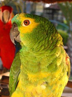 Parrot, Brazilian, Laurel