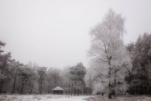 Tree, Cabin, Snow, Landscape, Nature, Forest, Wooden