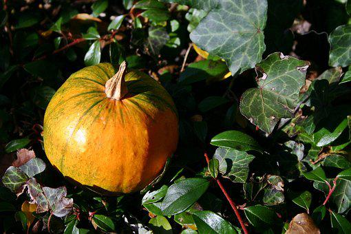 Gourd, Autumn, Leaves, Orange, Pumpkin, Decoration