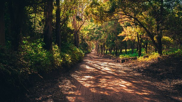 Forest, Mato, Road, Infinity, Beauty, Plant, Green