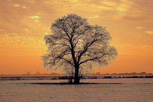 Tree, Lonely, Winter, The Horizon, Snow, West, Sun