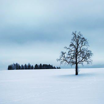 Wintry, Tree, Silent, Snow, Winter, Cold, Mood