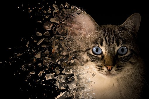 Cat, Background, Handling, Retouch, Dispersion, Effect
