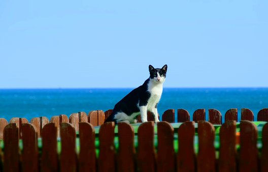 Cat, Sea, Animal, Animal World, Domestic Cat, Pet