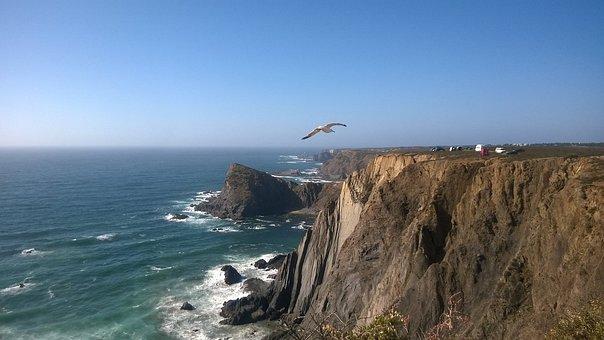 Seagull, Slope, Cliff, Aljezur