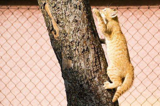 Cat, Kitten, Tree, Climbs, Lesion, Mammal, Tomcat
