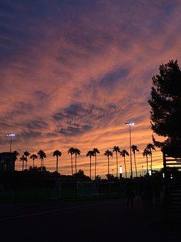 Sunset, Arizona, Phoenix, Palm Tree, Sky, Clouds